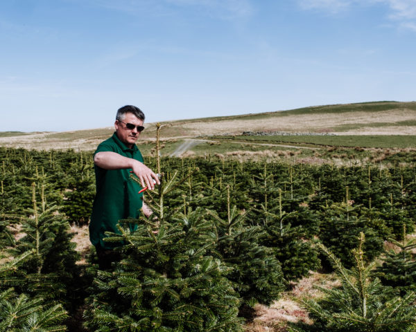 Real Christmas Tree Farm | Galloway Woodlands