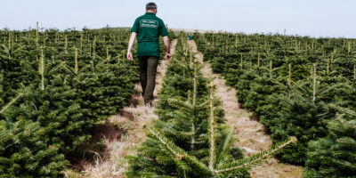 Man Checking Wholesale Xmas Tree