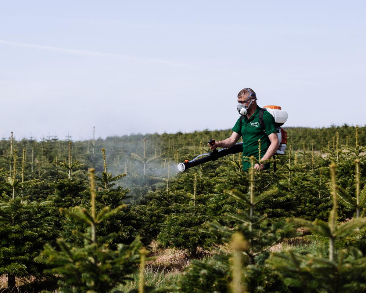 Xmas Tree Grower