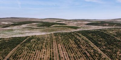 Christmas Tree Farm Aerial View | Galloway Woodlands