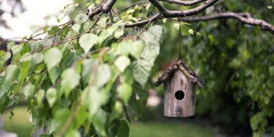 wooden bird feeder hanging in tree